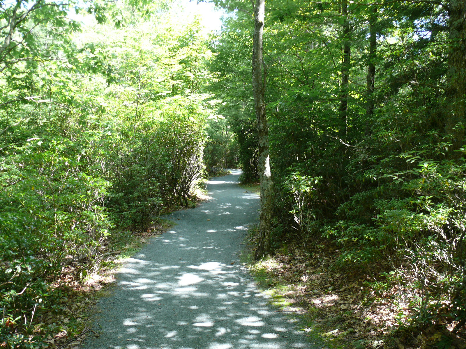 A Timberlost ösvény