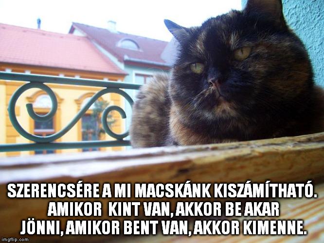 Szerencsére a mi macskánk kiszámítható