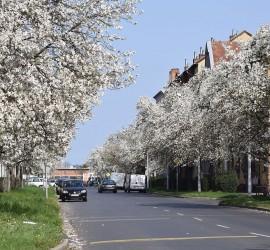 Szombathely, Semmelweis utcal