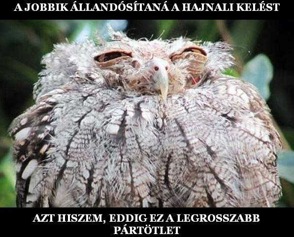 A Jobbik legrosszabb ötlete