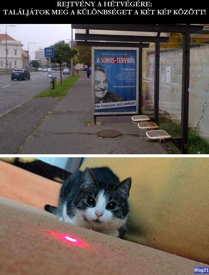 Van-e különbség a Soros-plakátok és a vörös lézerfényt kergető macskák között?