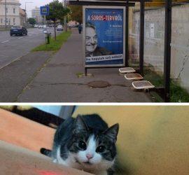 Van-e különbség a Soros-plakátok és a vörös lézerfényt kergető macskák között